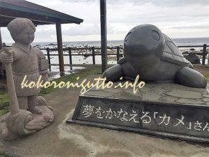 奄美大島 夢をかなえるカメ