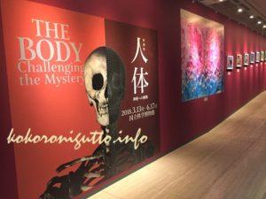 上野 国立科学博物館 人体展8