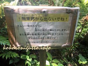 小網代の森3