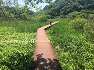 小網代の森8