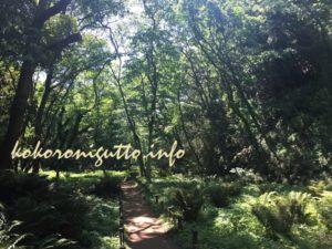 小網代の森5
