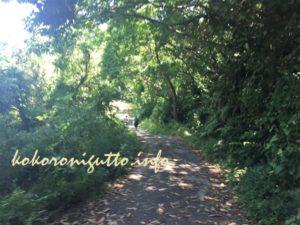 三崎口から小網代の森7