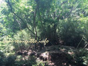 小網代の森4